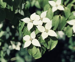 flowers, green, and outdoor image