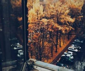 article, fall, and seasons image