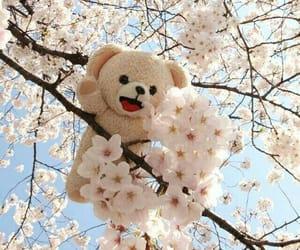 photography, teddy, and teddy bear image