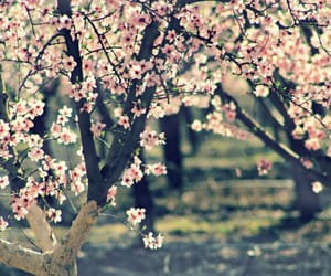 arbol, beautiful, and flores image