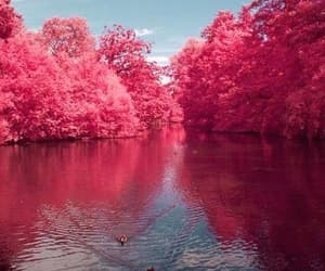 lake, nature, and pink image