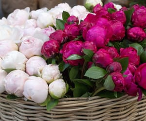 basket, beautiful, and peonies image