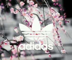 adidas, kwiaty, and flower image