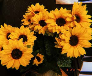 sunflower, Y, and yellow image