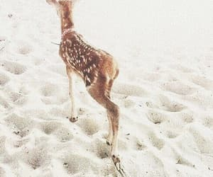 bambi, animal, and pastel image