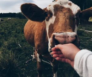 animal, vegan, and love image