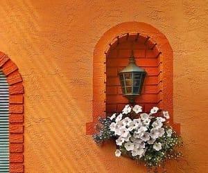 orange, flowers, and window image