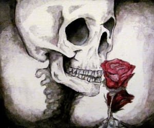 dead, death, and rose image