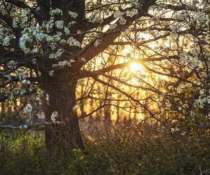 blossom, spring, and dusk image