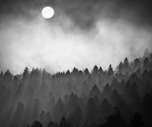 forest, dark, and foggy image