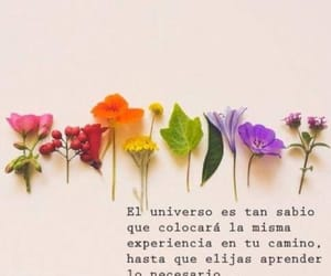 flowers, frases, and quotes image