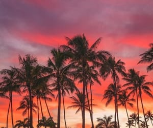 palms, love, and summer image