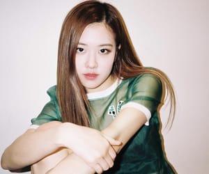 korean, rose, and blackpink image