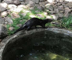 Animales, animals, and nutria image