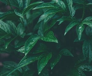 green and leaves image
