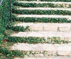 garden, plant, and stairs image
