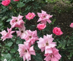garden, roses, and flowers image