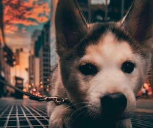 animal, city, and dog image