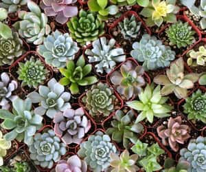 article and succulents image