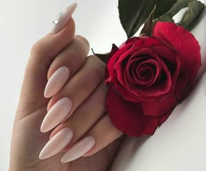 nails, rose, and girl image