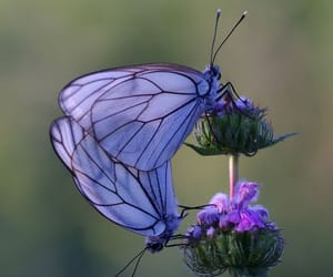 butterflies, purple, and summer image