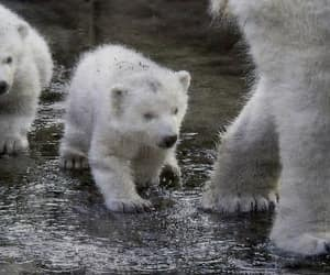 first time, mother, and Polar Bear image