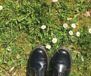 flowers, photo, and shoe image