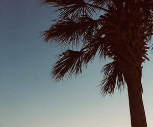 beach, palm, and sunset image