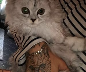 cat, Tattoos, and kitten image