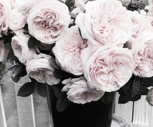 flowers, rose, and beautiful image