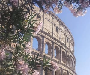 flowers, italy, and rome image