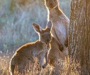 animal, baby, and bébé image