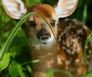 animal, bambi, and nature image