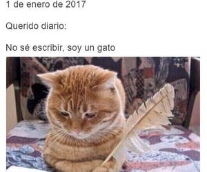 cat, espanol, and diary image