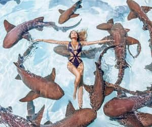 sharks and sea image