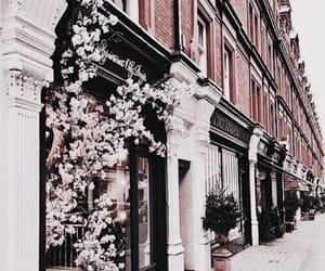 flowers, city, and travel image