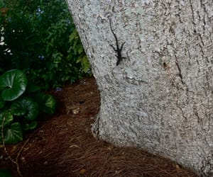 lizard, nature, and aesthetic image