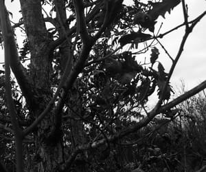 black and white, grunge, and nature image
