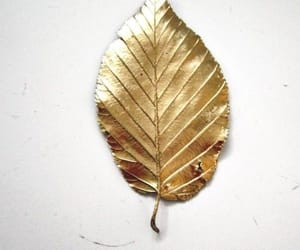 gold and leaf image