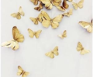 butterfly, gold, and aesthetic image