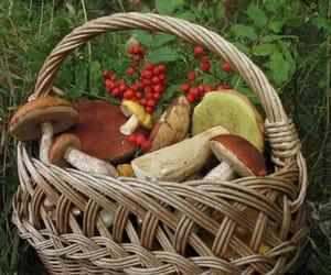fruit, mushroom, and theme image