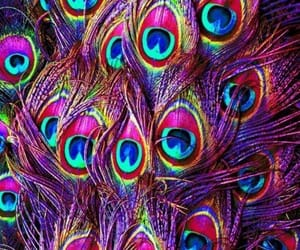 peacock and wallpaper image