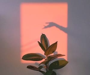 plants, hand, and light image