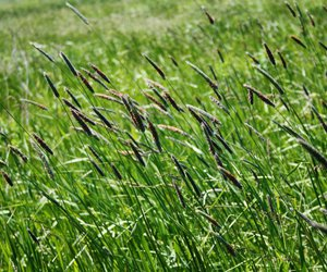 evening, grass, and plant image