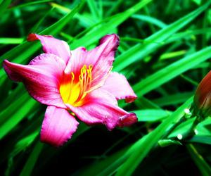flower, gorgeous, and green image