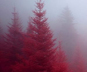 aesthetic, beauty, and red image