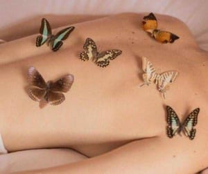 aesthetic and butterflies image