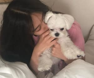 dog, korean, and ulzzang image