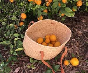 aesthetic, citrus, and fruit image