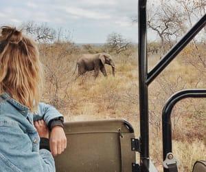 africa, elefant, and jeans jacket image